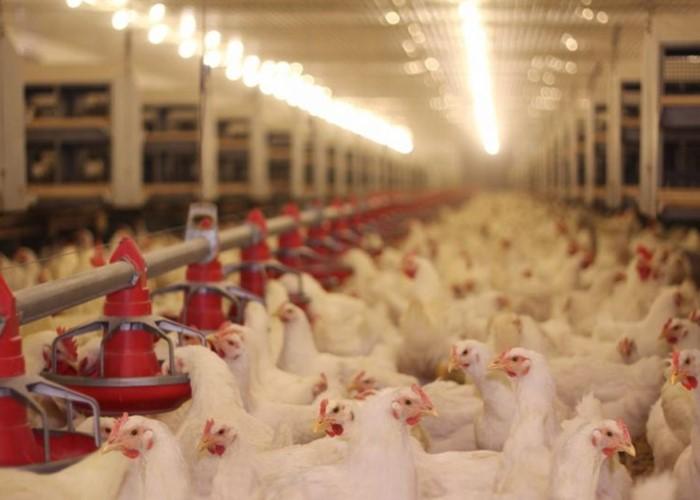 Indústria De Equipamentos Avícolas (14802)